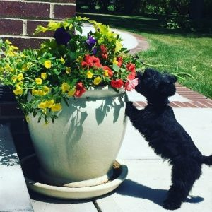 spring safety for pets
