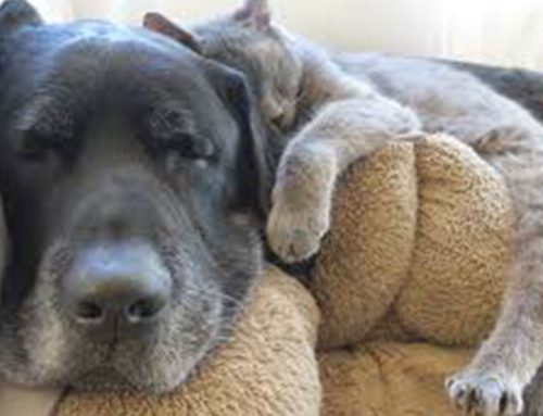 Helping Your Pet Age Gracefully