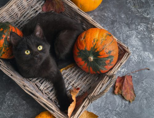 6 Tips for a Safe and Pet-Friendly Howl-O-Ween