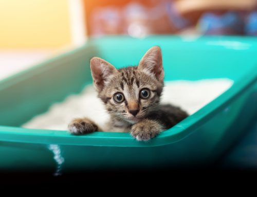 Peeing Outside the Box: Debunking a Mystery in Cats