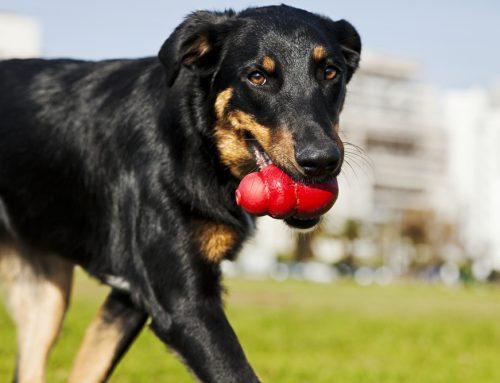 Chew Toy Catastrophes: Safe and Unsafe Chews for Your Pet