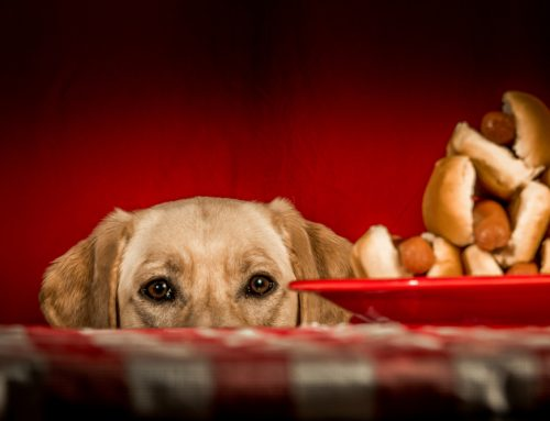 Do's and Don'ts of Barbecue Safety For Partying Pets
