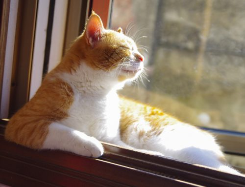Do's and Don'ts of Summer Safety for Sun-Loving Pets