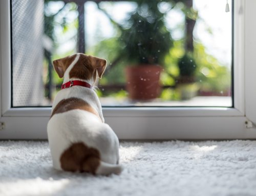 8 Tips to Prevent Your Dog from the Back-to-School Blues